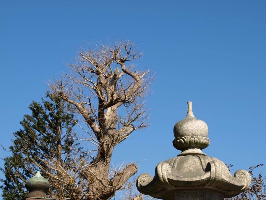 鎌倉P1013119.jpg