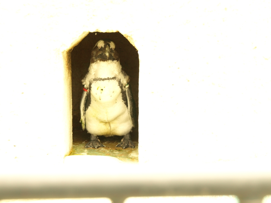 P1019236ペンギン中.jpg