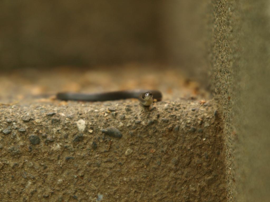 蛇P1015524.jpg